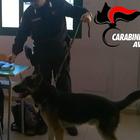 Droga nascosta sotto una mattonella in una scuola in Campania