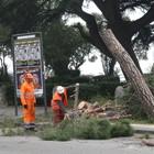 «Salviamo i pini storici  di viale degli Atlantici»