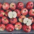 """""""Una mela al giorno leva il medico di torno"""", gli scienziati svelano il perché"""