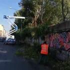 Tagliati gli alberi nell'ex area Italsider:  «Scongiurare pericoli cittadinanza»
