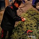 L'albero di Natale della Galleria rubato e ritrovato ai Quartieri