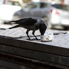 Tenta di salvare uccellino caduto dal nido e muore