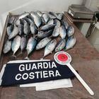 Cilento, blitz della guardia costiera: sequestrati 40 tonnetti rossi