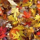 Equinozio d'autunno, anche quest'anno arriva il 23 settembre: ecco perché