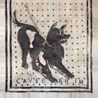 «Cave canem» diventa «Accort'ô cane… mozzeca», la traduzione è virale
