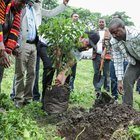 Etiopia, piantati 350 milioni di alberi in un giorno per combattere i cambiamenti climatici