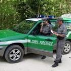 Blitz all'alba nel Vallo di Diano: sequestrati 150 bovini malati