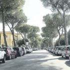 Benevento, pini a rischio caduta:  «Quegli alberi vanno abbattuti»