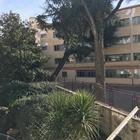 Colli Aminei: gigantesco albero si abbatte sulle aule della scuola Mameli