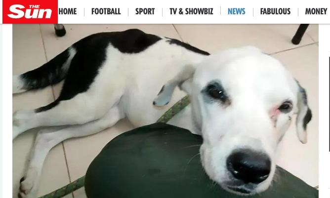 Abbandonato all'aeroporto per un mese: questo cane è morto di crepacuore